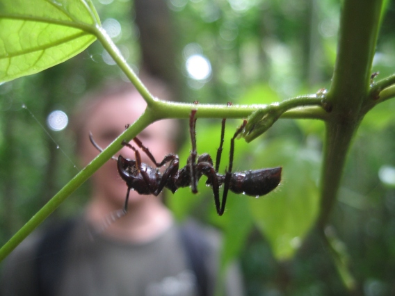 Andrew and the Ant. Photo: Adrienne Godschalx